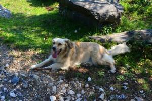 Lange Zunge bei Nicol – sie braucht eine Pause im Schatten