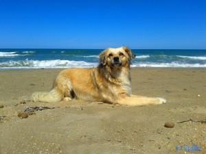 ...unsere Hübsche am Strand von L'Almadrava