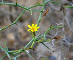 Kleine Blüte – nicht grösser als ca. 1cm!