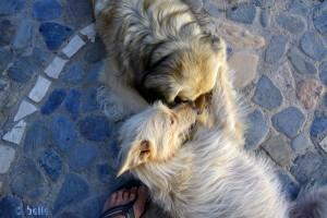 Ein einziges Wollknäul die beiden – Emma & Nicol ♥