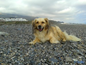 Nicol at Playa Castillo de Macenas