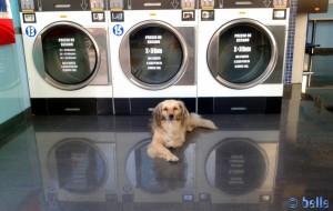 Der Boden ist gewienert! Nicol in der SelfWash-Laundry