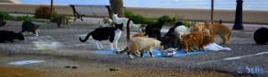 Katzen-Alarm in Adra