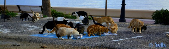 20151019_184341 Cat-Alarm in Adra - Spain