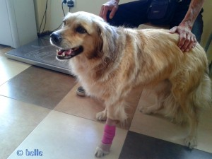 Nicol trägt Pink ♥