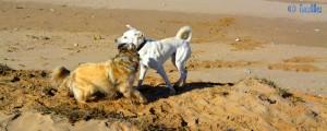 Nicol and Biondo at the Plage Tarfaya - Laâyoune-Sakia el Hamra - Marokko