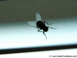 Fliegen-Alarm