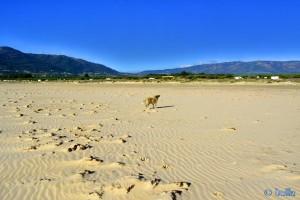 Nicol (hier kurz ohne Leine) at Playa de los Lances Norte - N-340, 11380 Tarifa, Cádiz, Spanien – November 2015