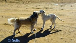 """Nicol macht Bekanntschaft mit Chico – dem Hund des """"Guards"""""""