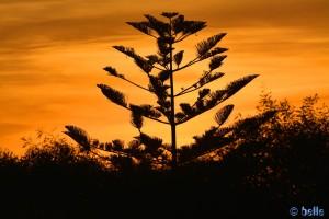 Sunset in Oualidia, Marokko (Nikon D5200)