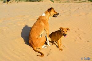Hunde-Mama mit ihrem Welpen - Plage Tamri – Marokko