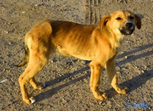 Puppy - Plage Tamri - Marokko
