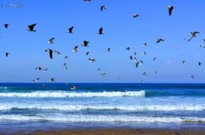 Möwen am Strand – Plage Tamri – Marokko