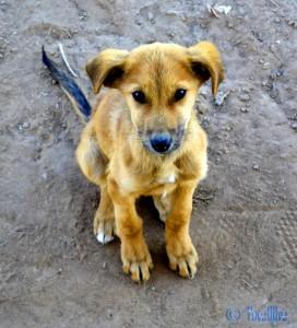 """Maaaaaaaa kann die Kleine herzig schauen!!! """"Puppy"""" - Tamri Plage – Marokko"""