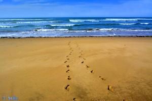 Deine Spuren im Sand.... *träller* - Plage A. - Marokko