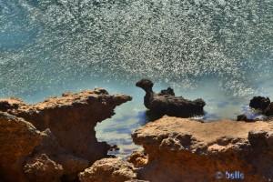 Ente in Dakhla – Marokko :o