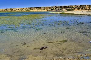 Glasklares Wasser - Dakhla – Marokko