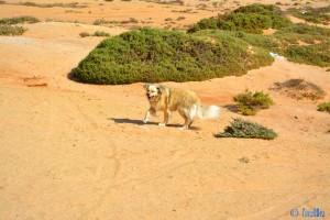 Die Welt ist noch in Ordnung – Nicol in Dakhla – Marokko