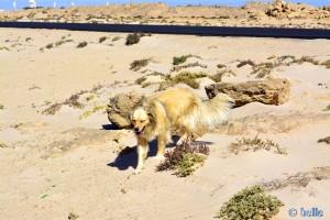 Verflixt - die Eidechse hab' ich nicht bekommen... Nicol in Dakhla – Marokko