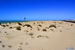 Auf geht's - nach Hause! Wir sind schon weit genug gelaufen - Nicol in Dakhla – Marokko