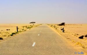 Windschiefe Bäume und Flugsand - On the Road to Dakhla – Marokko