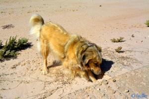 Nicol hat was entdeckt - Dakhla – Marokko
