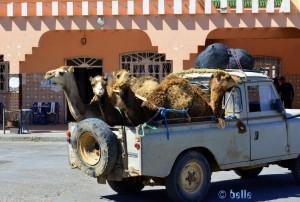 5 Kamele im Pickup - Petrol-Station in Lemsid – Marokko