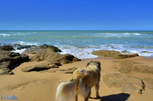 Madame LILA will mit aufs Bild - Foum El Oued – Marokko
