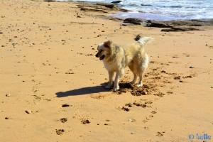 Nicol am Strand von Foum el Oued – Marokko