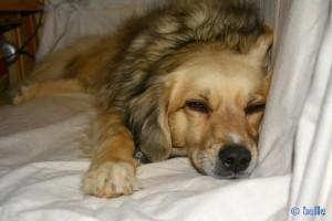 Nicol sagt: Gute Nacht meine Lieben ♥
