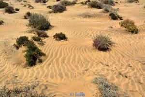 Zauberhaftes Windspiel im Sand - El Ouatia – Marokko