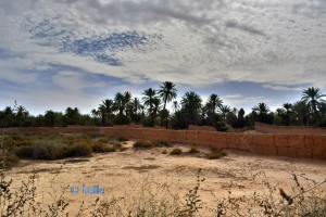 Oase Tighmert – Marokko