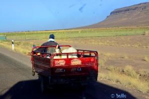 Hier werden Ziegen chauffiert - kurz vor Zagora - Marokko