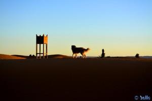 Nicol in Merzouga - Erg Chebbi – Marokko ...schaut erst mal gelangweilt in die andere Richtung...