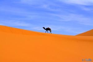 Postkarte: Kamel in Merzouga - Erg Chebbi – Marokko