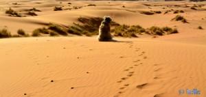 Nicol betrachtet das fabelhafte Panorama in Merzouga - Erg Chebbi – Marokko