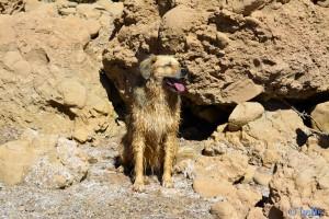 Ich war schon baden! Nicol at Barrage Al Mansour Ad Dahbi – Marokko