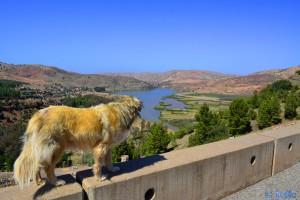 Auch Nicol geniesst die Aussicht - Barrage D'Aït-Aadel – Marokko