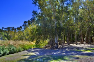 Lichter Wald am Lac Des Aït-Aadel – Marokko