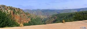 Zwei Berberaffen vor einem fabelhaften Panorama - Ouzoud - Marokko