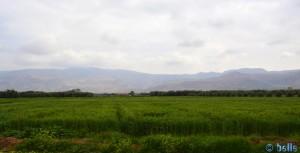 Weizenfelder und Olivenbäume so weit das Auge reicht - N8 - On the Road - Marokko