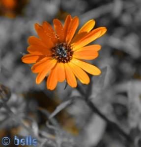 Frühlingsbote - N8 – Marokko