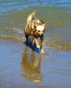 Nix wie raus aus dem Wasser – das ist so liquid!!! Nicol am Plage Martil – Marokko