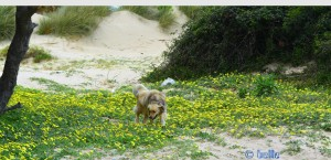 Nicol – die Blumenfee ;) - Plage Dalia – Marokko