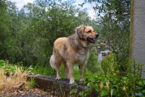 Nicol in Santa Margherita Ligure – Italy