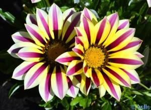 Unbekannte Blüten in Vigna – Italy