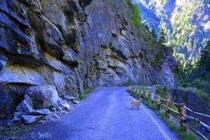 SP104 - Valle Elva – Italy