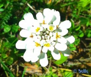 Unbekannte Blüte in Italien - auf 1000 Meter über dem Meeresspiegel