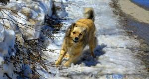 "Ich bin ""On Guard!"" Nicol in the Snow - Colle di Sampeyre - 2284m – Italy"