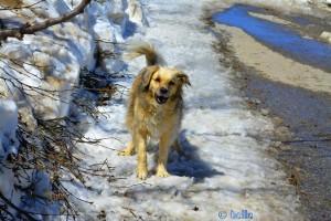 Happy Nicol ♥ in the Snow - Colle di Sampeyre - 2284m – Italy
